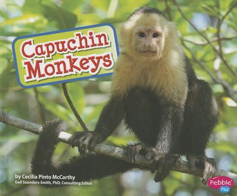 Capuchin Monkeys By Mccarthy, Cecilia Pinto